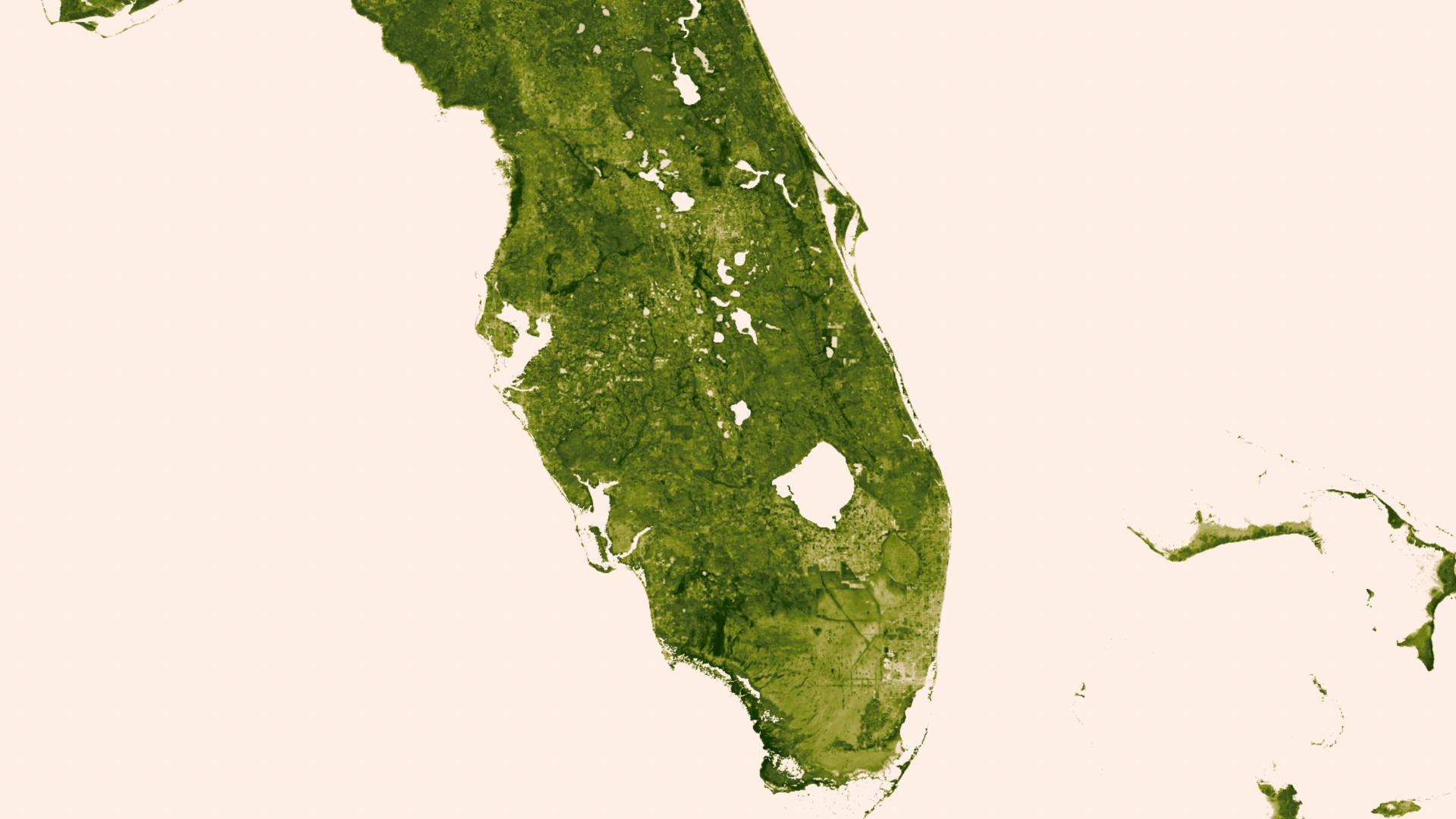 NOAA Environmental Visualization Laboratory Green Vegetation On - Satellite maps florida